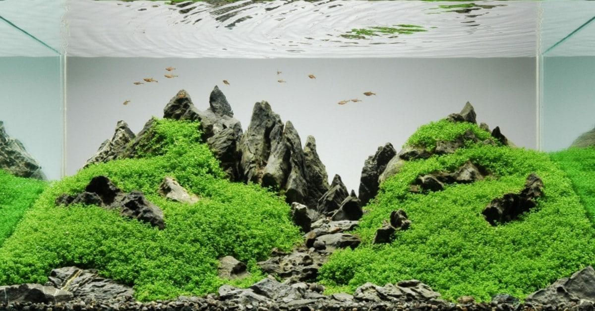 Iwagumi auqascape for aquariums