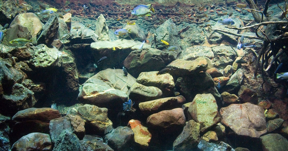 hardscape aquascape for aquariums